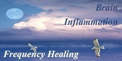 brain inflammation healing